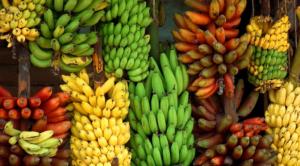 BananenArten_Magazin_Freshbox