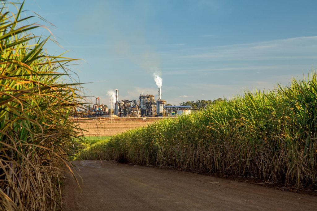 84684631 - factory sugar cane