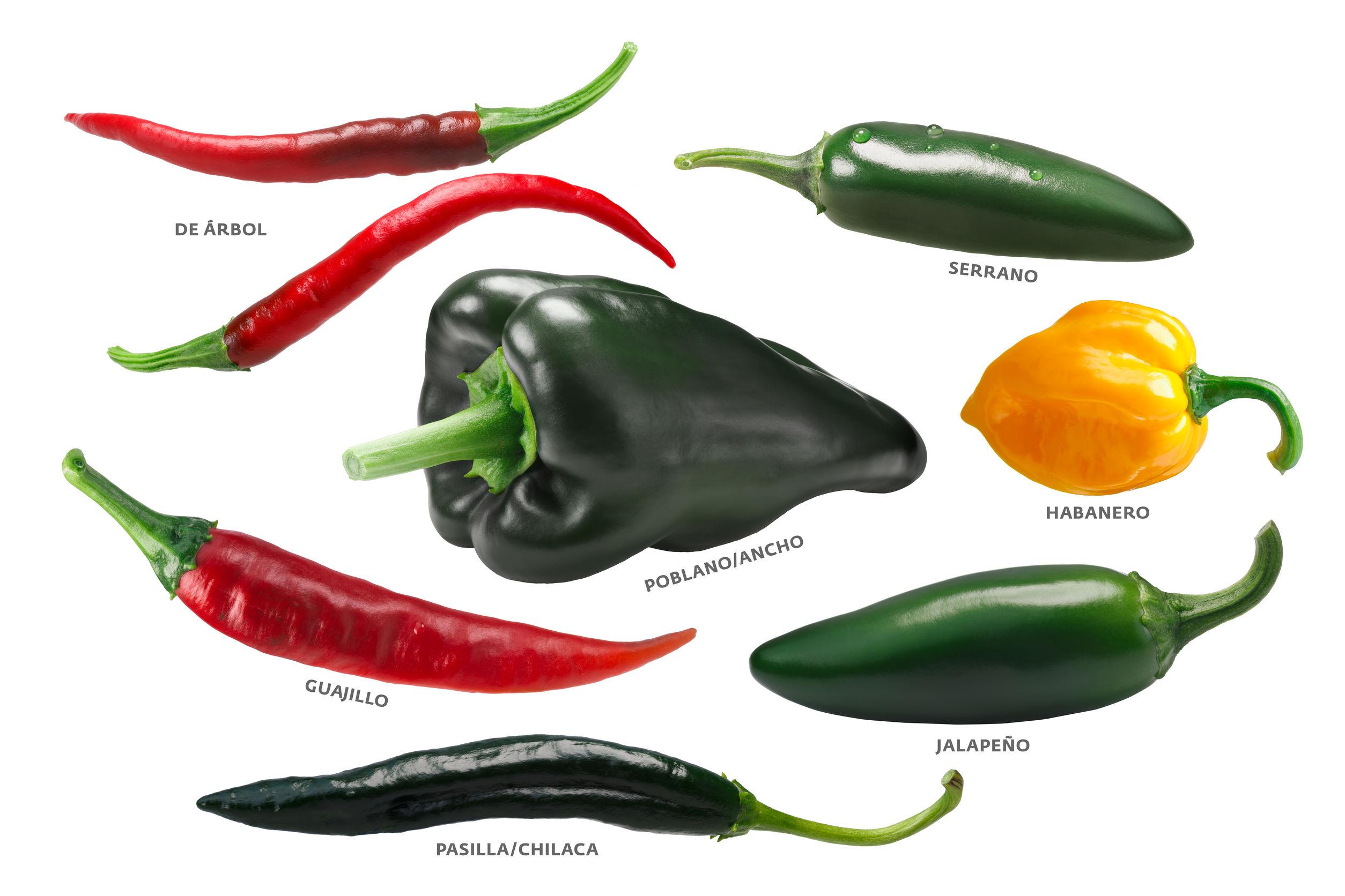 Mexican chile peppers: Arbol, Pasilla, Guajillo, Poblano, Habanero, Jalapeno. Clipping paths